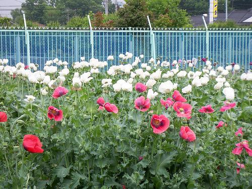東京都薬用植物園