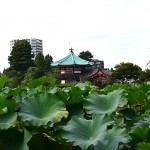 shinobazunoike