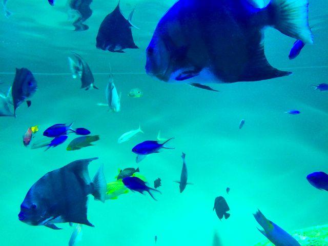 葛西臨海公園水族園