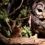 鎌倉乃フクロウの森