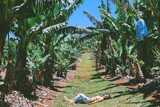 トロピカルフルーツワールド / Tropical Fruit World