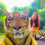 m1_wacham_tiger