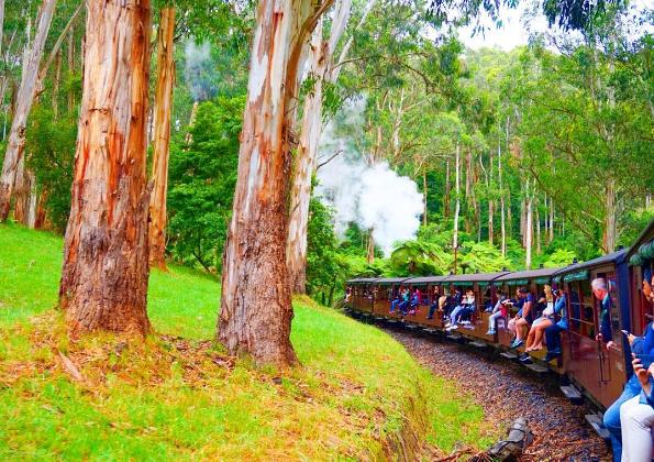 パッフィンビリー鉄道 / Puffing Billy Railway