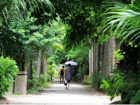 亜熱帯植物園 由布島
