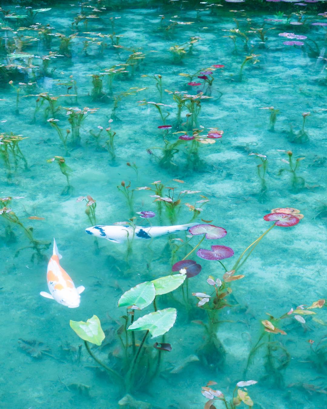 モネの池(根道神社)