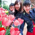 narumi_tajima_tulip