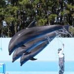 tsukasa_shiromi_marine