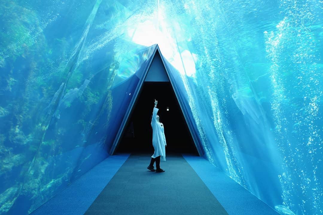 アクアマリンふくしま   日本最大級のSNS映え観光情報 スナップレイス