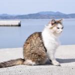 mg_tashiroshima_mitsugram_cat