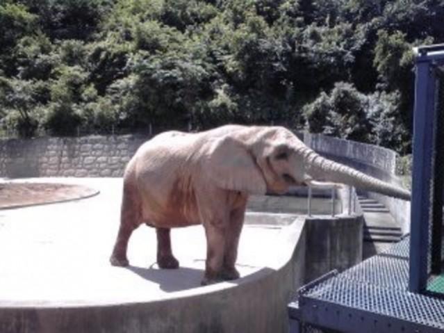 動物園 大 森山