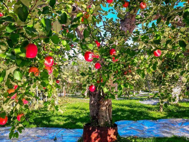 青森観光りんご園