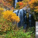 yasunotaki