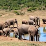 elephant-241624_640