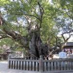 ooyamasjin
