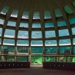 dome, seattle aquarium Seattle Aquarium exhibits Underwater Dome
