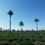 palms-319202_960_720