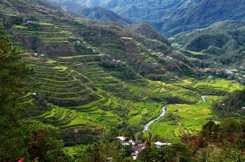 Rice Terraces of the Philippine Cordilleras(コルディエーラの棚田群)