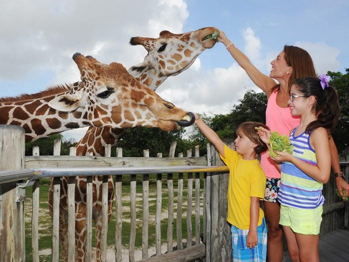 Zoo Miami(マイアミ動物園)
