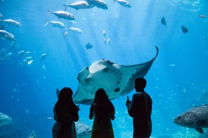 Georgia Aquarium(ジョージア水族館)