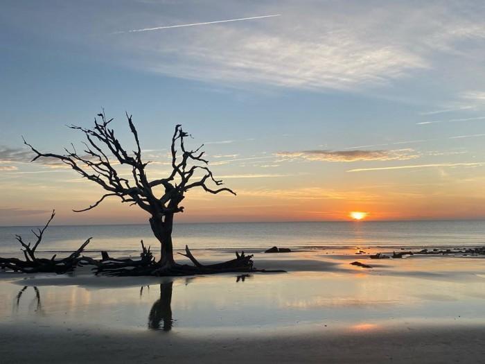 Driftwood Beach(ドリフトウッド・ビーチ)