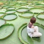 hi7_n03_lotus