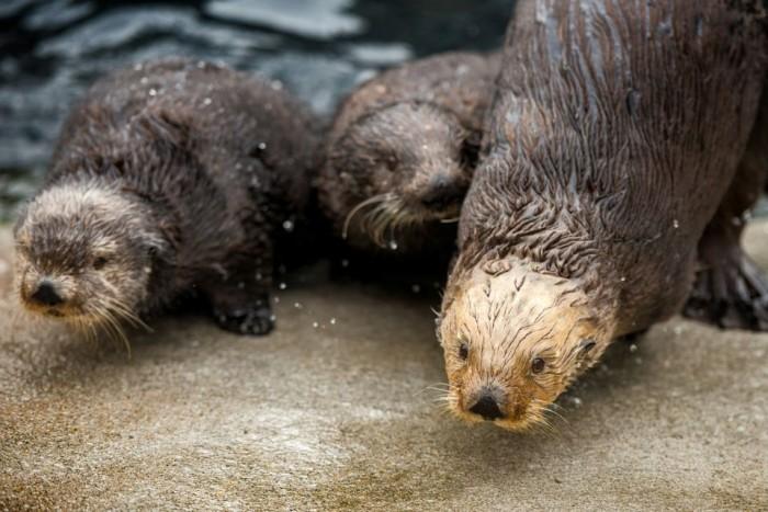 Monterey Bay Aquarium(モントレーベイ水族館)