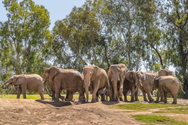 San Diego Zoo Safari Park(サンディエゴ・ズー・サファリ・パーク)