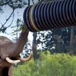 hero-elephants
