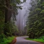 redwood-national-park-1587301_960_720