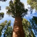 sequoia-2406954_960_720