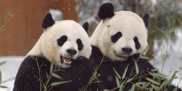 Smithsonian National Zoological Park(国立動物公園)