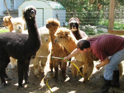 Jersey Shore Alpacas(ジャージー・ショア・アルパカス)