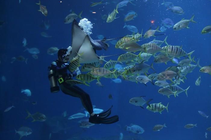 Atlantic City Aquarium(アトランティック・シティ水族館)