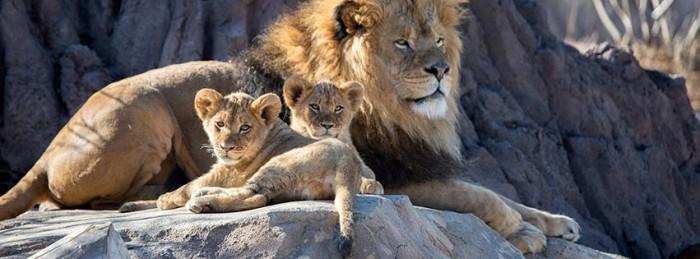 Denver Zoo(デンバー動物園)