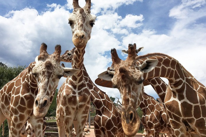 Cheyenne Mountain Zoo(シャイアンマウンテン動物園)