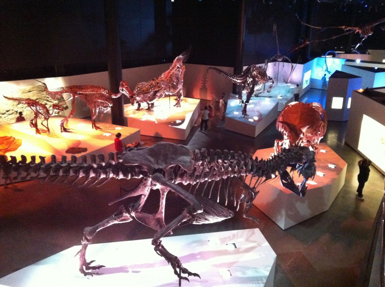 Houston Museum of Natural Science(ヒューストン自然科学博物館)
