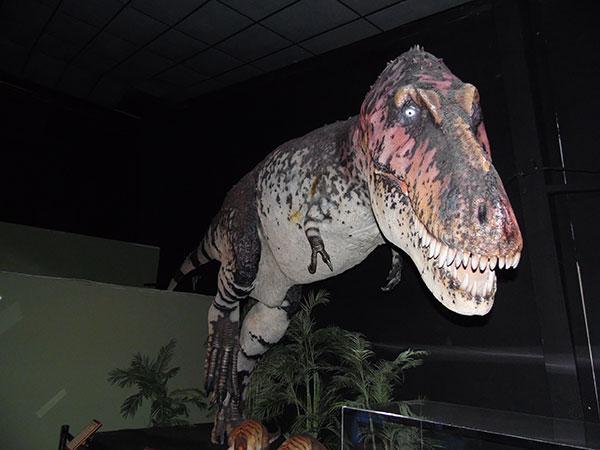 Dinosaur Museum(恐竜博物館)