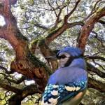 bird-5996416_960_720
